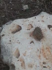 Cactusinarock