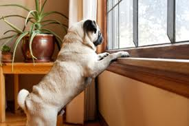 dogwaits