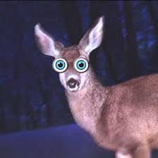 deerinheadlights