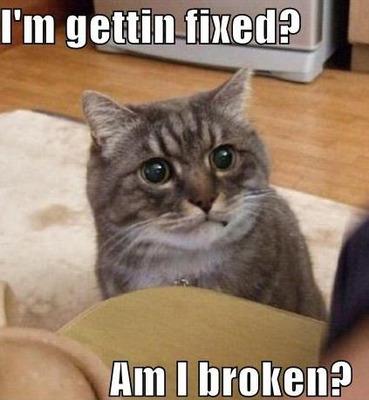 brokencat