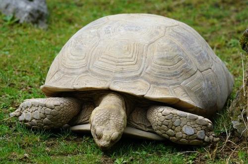 turtle-871285_640.jpg
