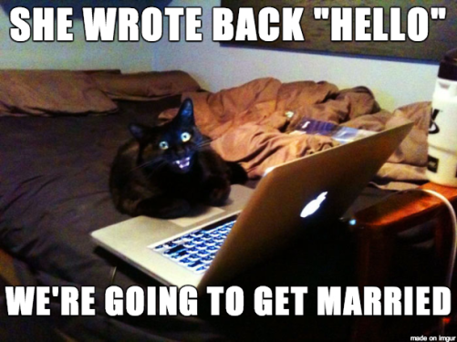 Lonely-Cat-Bachelor-Is-Too-Eager-For-Love.png